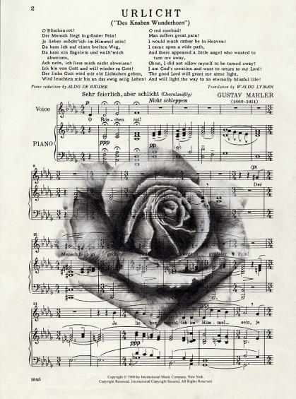 'Urlicht Rose'